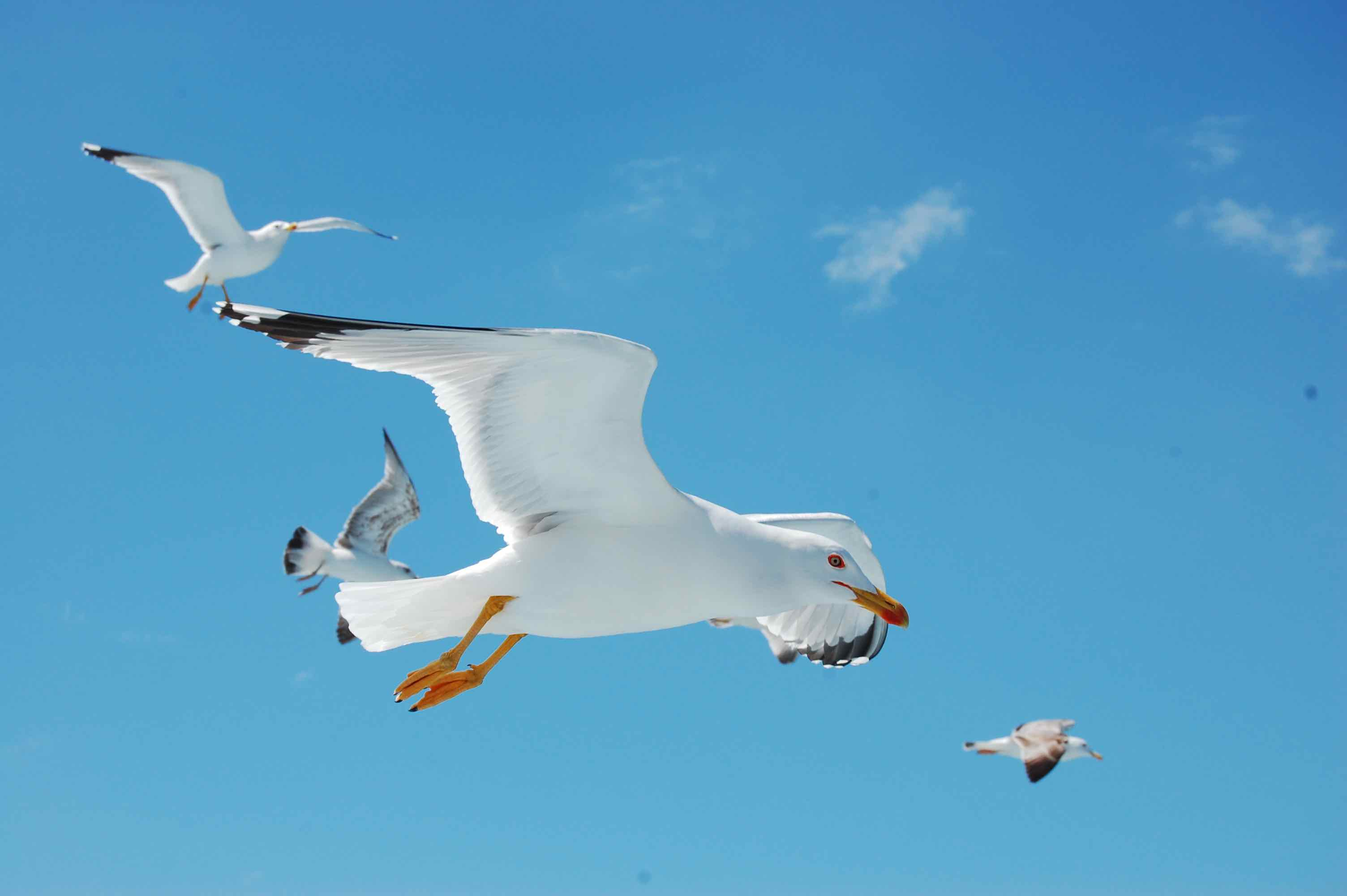 close-up photo of seagulls against a blue sky